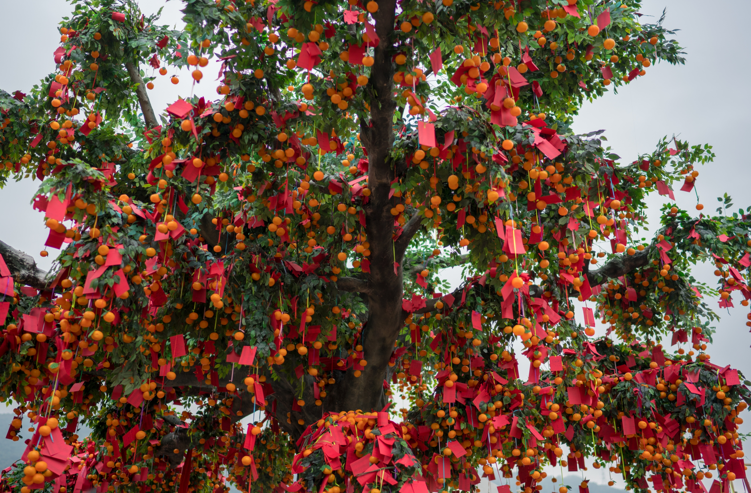 chinese new year blessing tree
