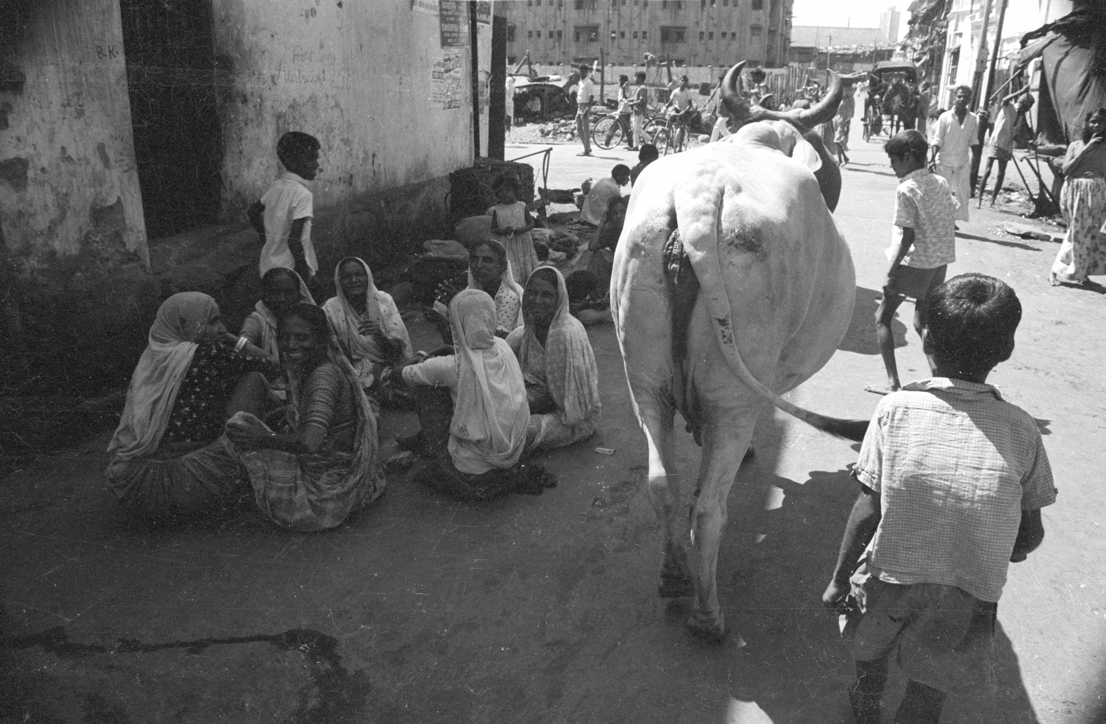 india 1970 - cow - people in bombay